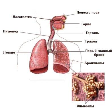 паразиты легких человека лечение